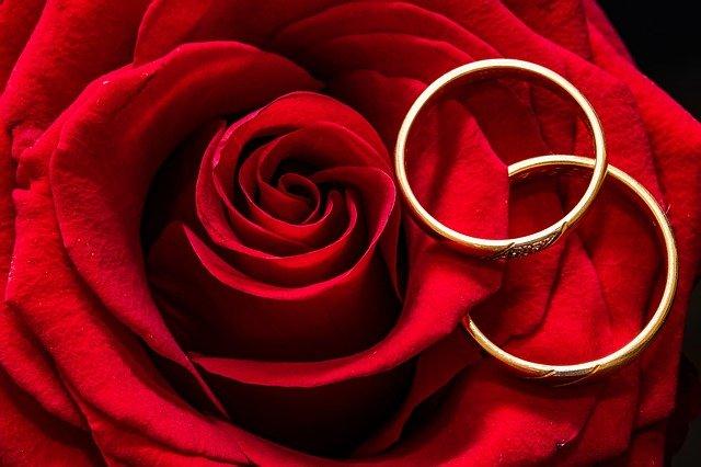 snubní prsteny na růži.jpg