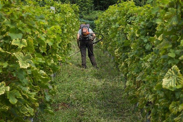 pracovník vinice.jpg